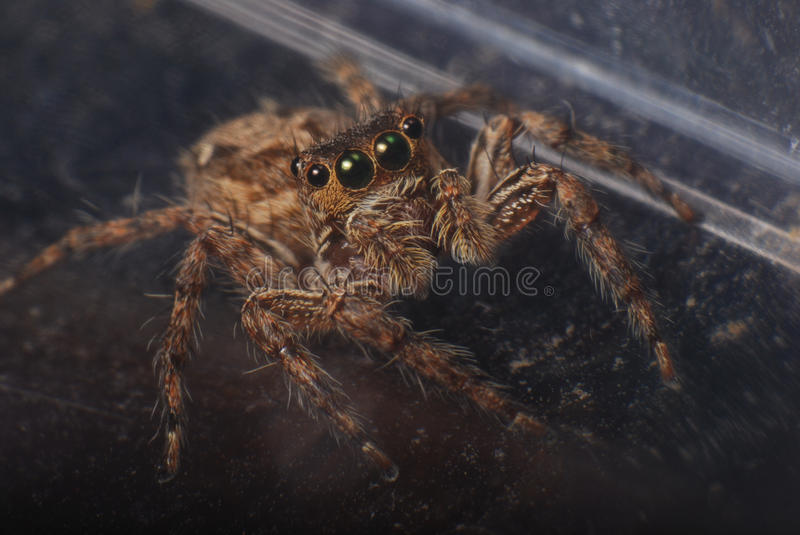 Download Brown Jumper stock image. Image of spider, fear, wight - 22747543