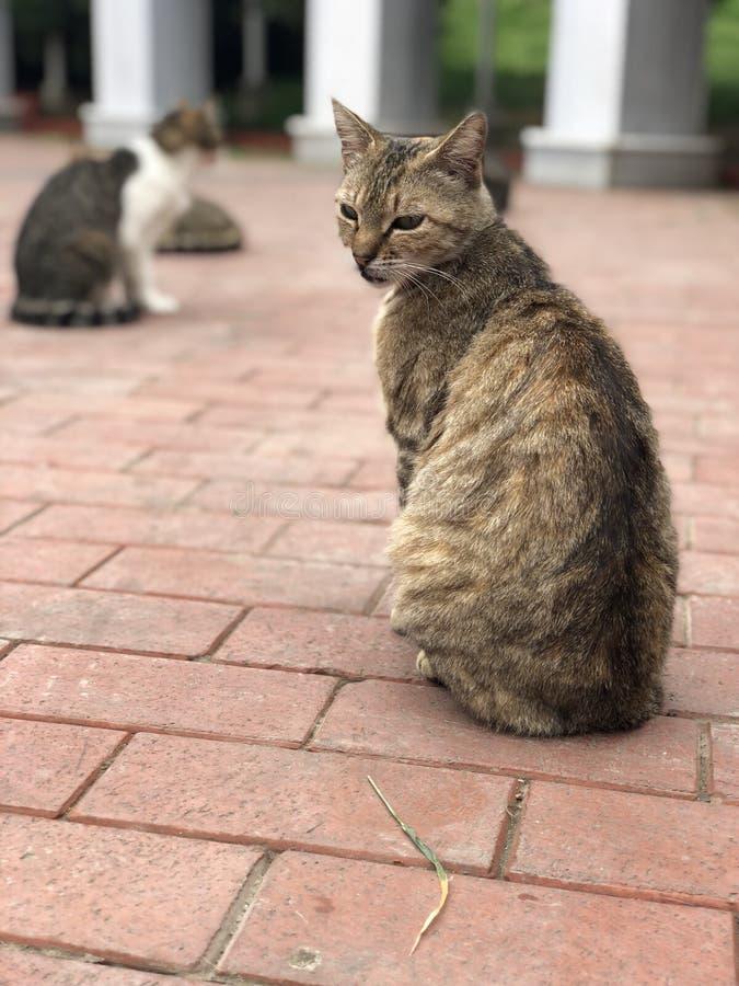 Brown-Katze auf Pflasterung stockfotos