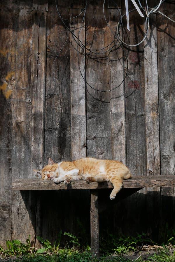 Brown-Katze, die auf einer copyspace Bank schläft stockfoto