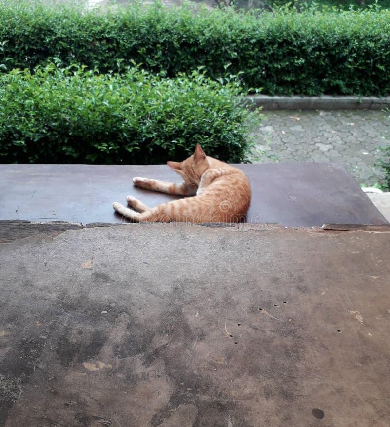 Brown-Katze und grüner Busch im Garten lizenzfreies stockbild