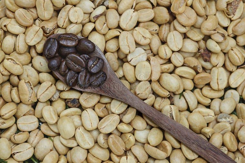Brown kawowa fasola w łyżce obraz royalty free