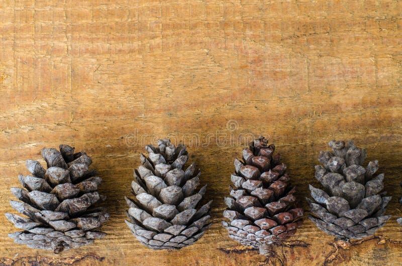 Brown-Kiefern- und -zedernkegel auf hölzernem Hintergrund stockbild