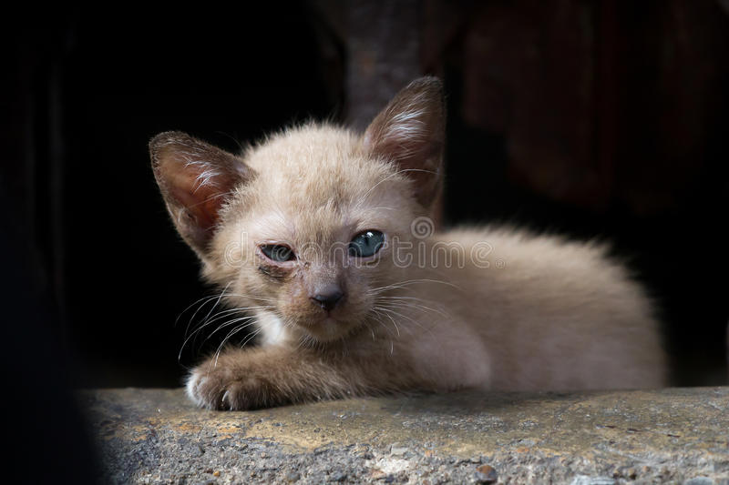 Brown kitten sore eyes in low light Focus on the eyes royalty free stock images