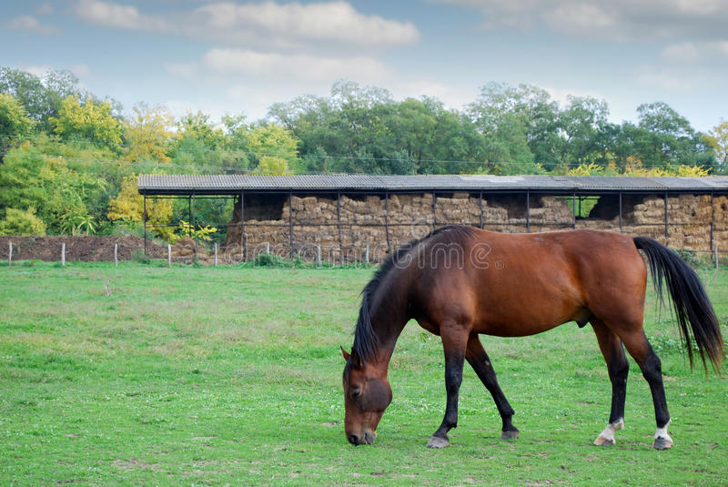 Brown konia gospodarstwa rolnego scena fotografia stock