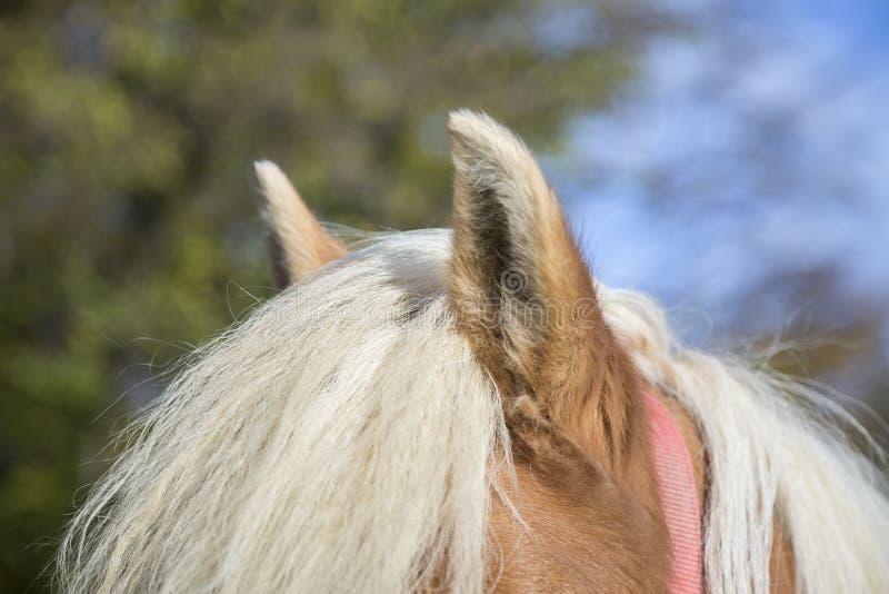 Brown konia ucho fotografia stock