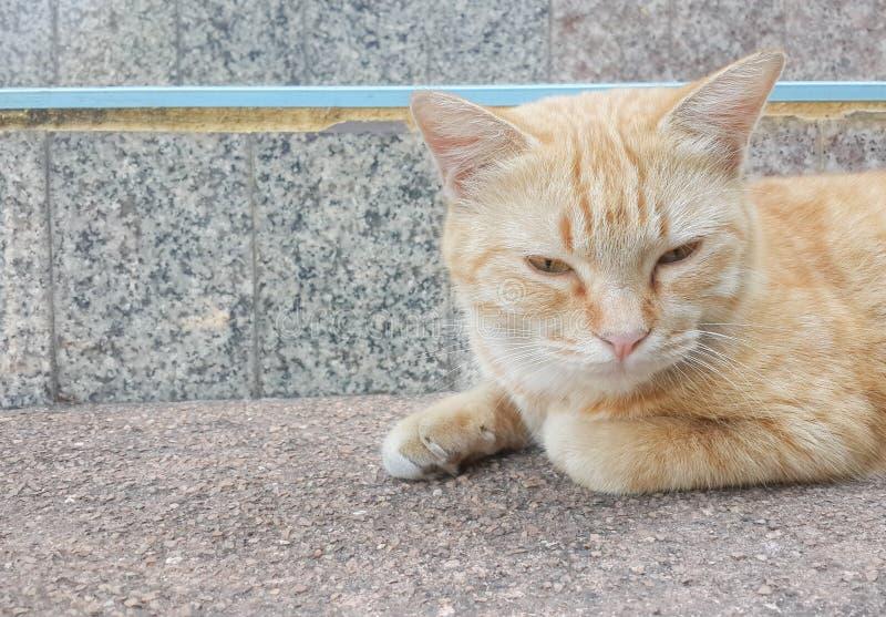 Brown kot śpi, wzdłuż schodków fotografia royalty free