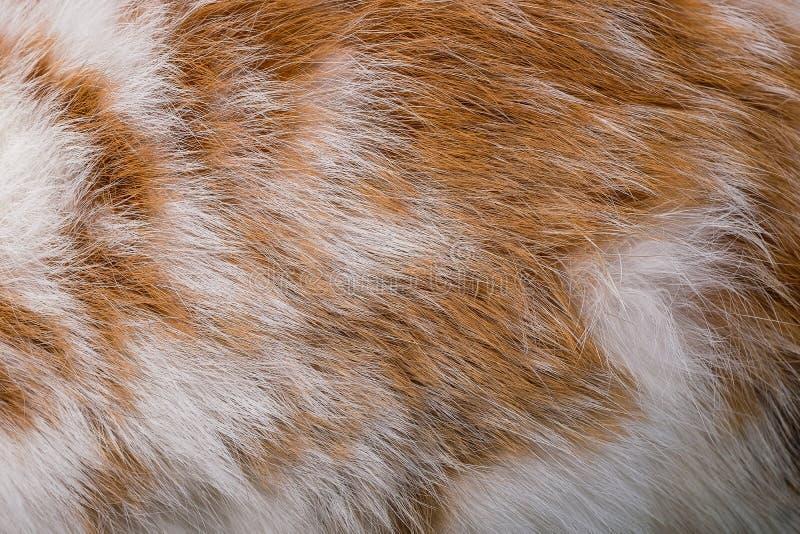 Brown królika tekstury zwierzęcej skóry futerkowy tło zdjęcie stock