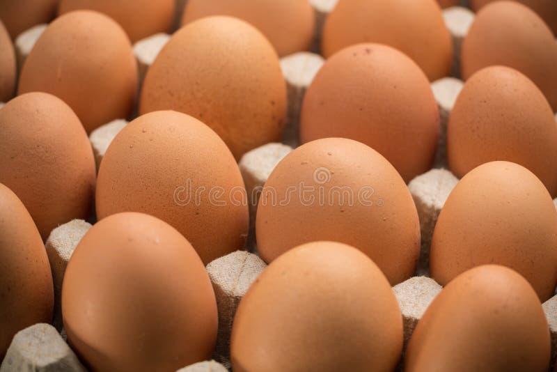 Brown kurczaka bezpłatni jajka zdjęcie royalty free