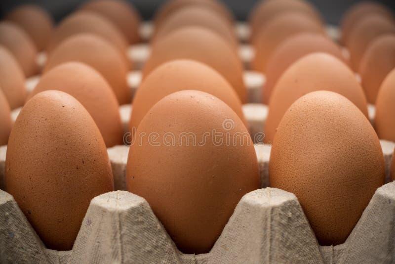 Brown kurczaka bezpłatni jajka zdjęcia stock