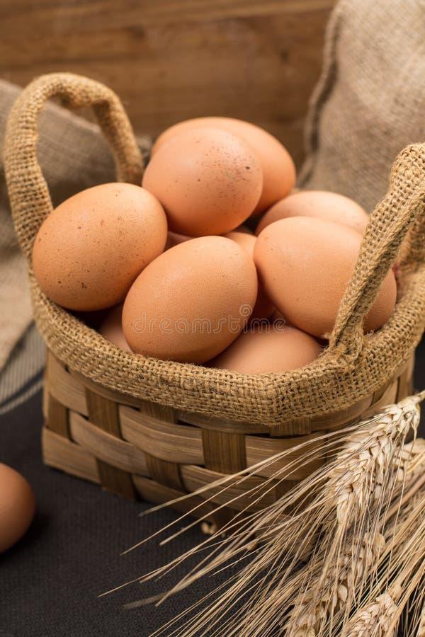 Brown kurczaka bezpłatni jajka obrazy royalty free