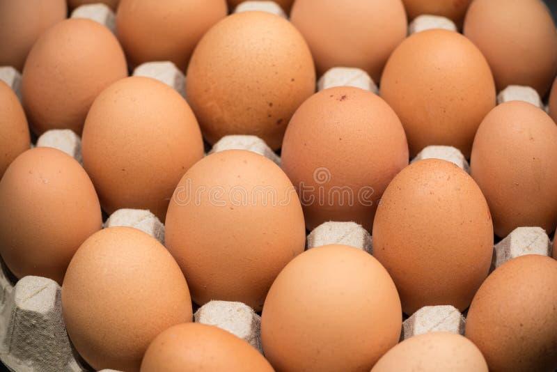 Brown kurczaka bezpłatni jajka zdjęcia royalty free