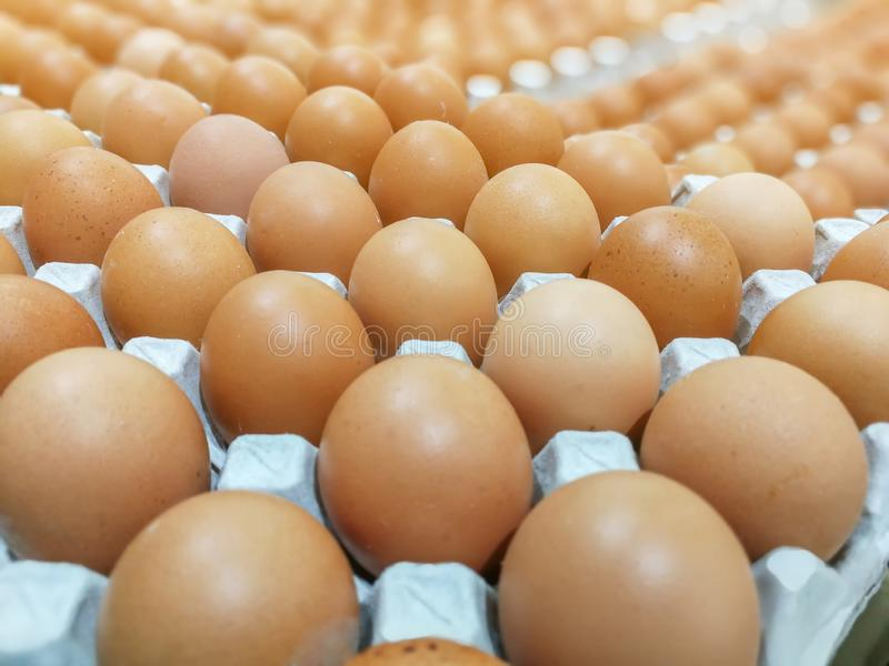 Brown kurczaka jajka w jajecznej tacy, świezi surowi kurczaków jajka w pakunku dla sprzedaży w supermarkecie obrazy stock