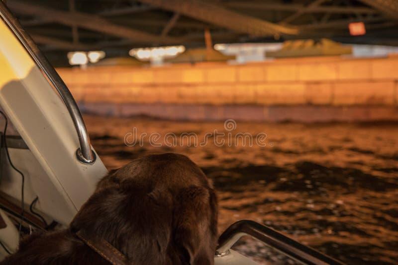 Brown Labrador, welches die szenische Herbstschönheit vom Boot betrachtet stockbilder