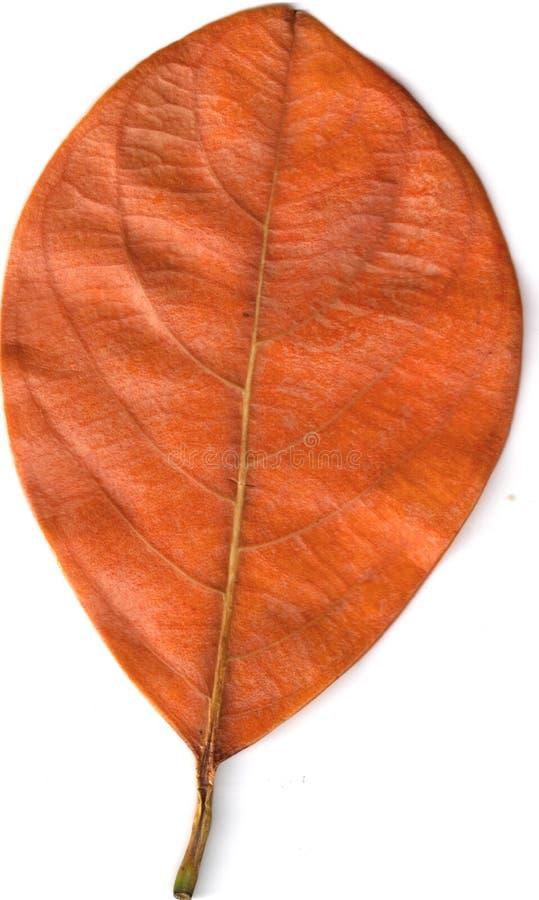 Brown leaf stock photo