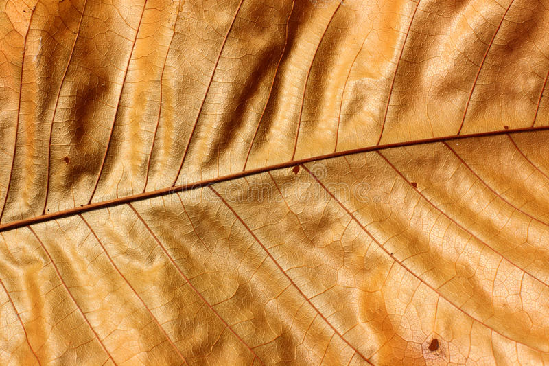 Download Brown leaf stock photo. Image of november, illustration - 21011026