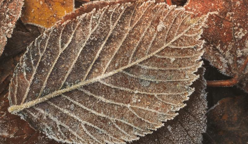Brown leaf, background, texture, close-up. stock photos