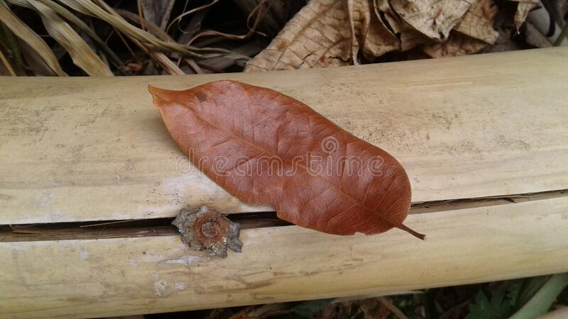 Brown Leaf On Brown Bamboo Free Public Domain Cc0 Image