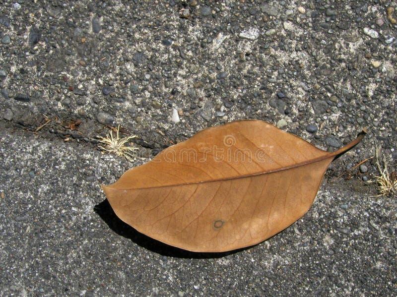 Brown Leaf on the Sidewalk