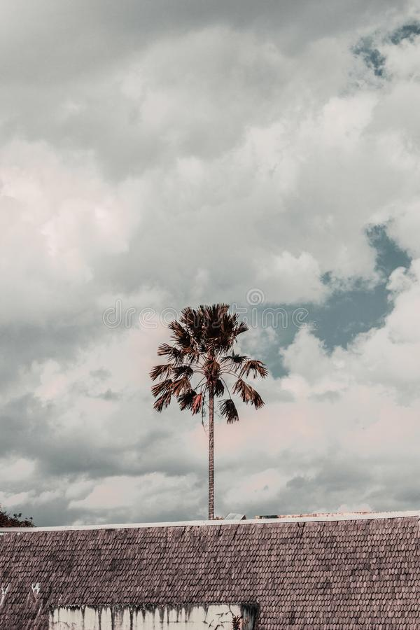 Brown Leafed Tree Under Cloudy Skies stock photography