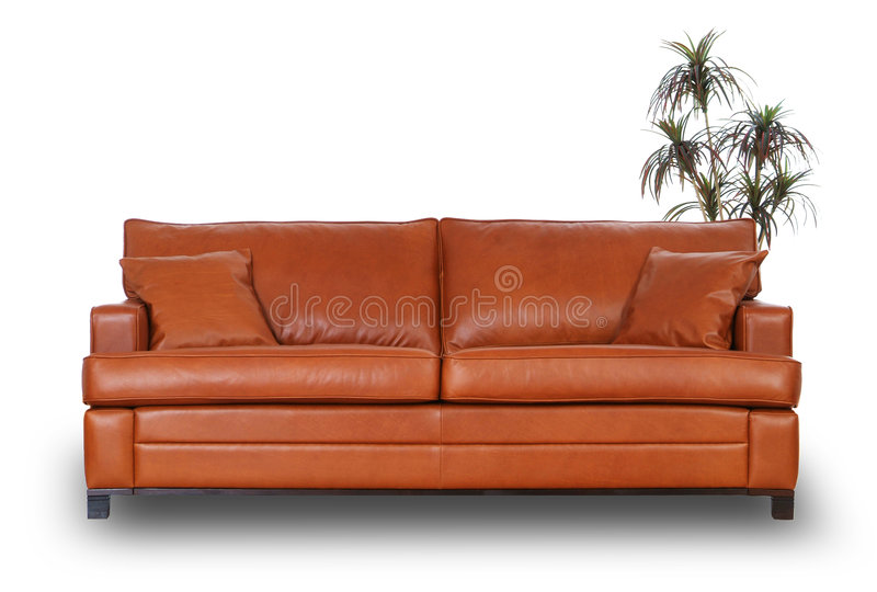 Brown leather sofa with small palm tree. Isolated on white stock photo