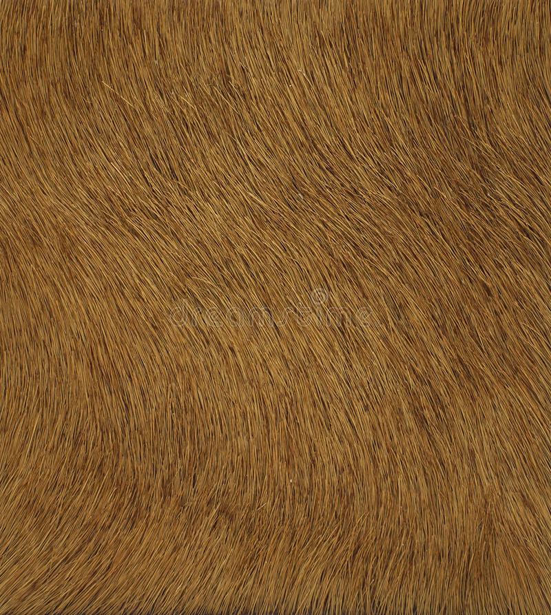 Download Brown  Leather Texture Stock Photos - Image: 24503543