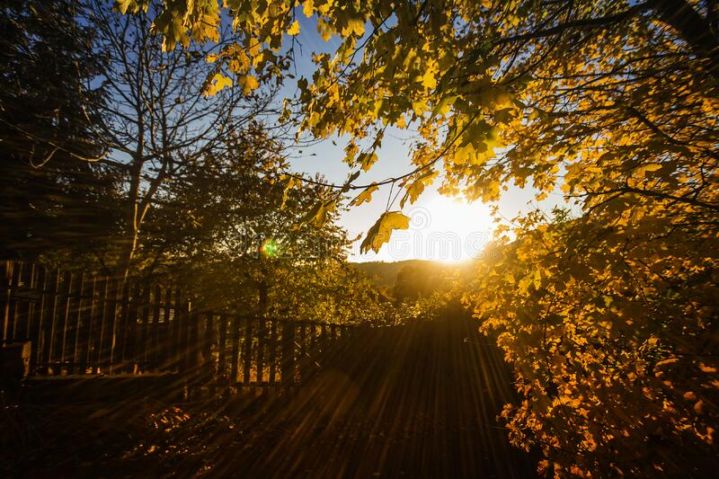Brown Leaves and Fence With Sunlight royalty free stock photography