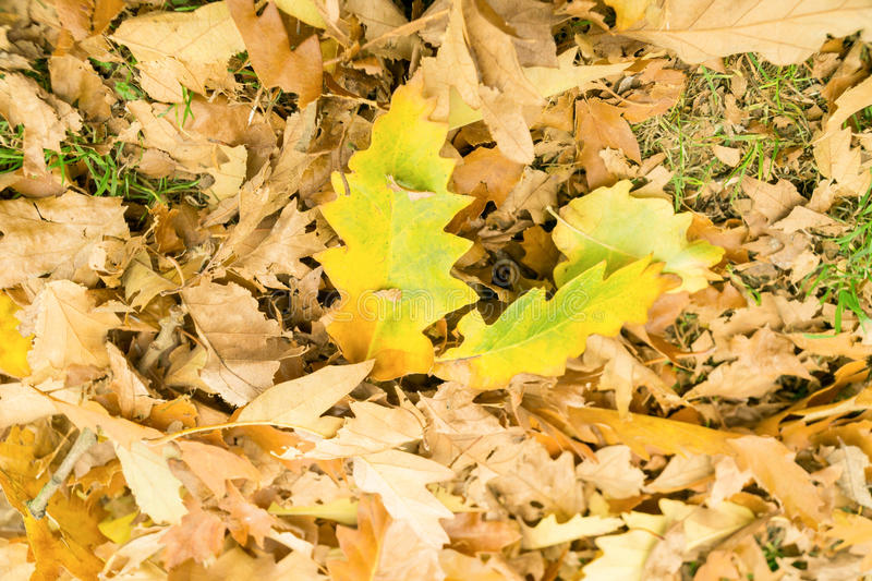 Brown leaves on the ground in Autumn. At a park, UK stock image