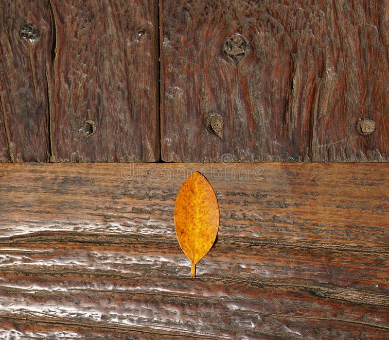 The brown leaves are placed on several old wooden plates that are pinned with nails. The brown leaves are placed on several old wooden plates that are pinned royalty free stock image