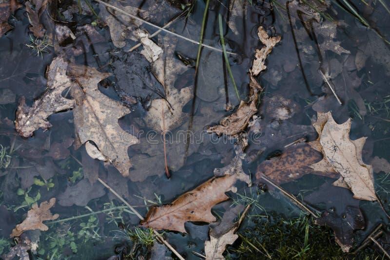 Brown liście w wodzie z trawą wokoło zdjęcia royalty free