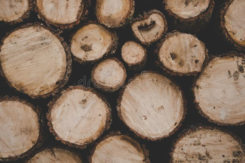 Brown Logs royalty free stock images
