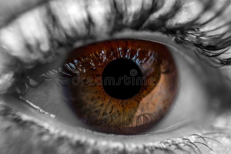 Brown ludzki oko makro- zdjęcia royalty free
