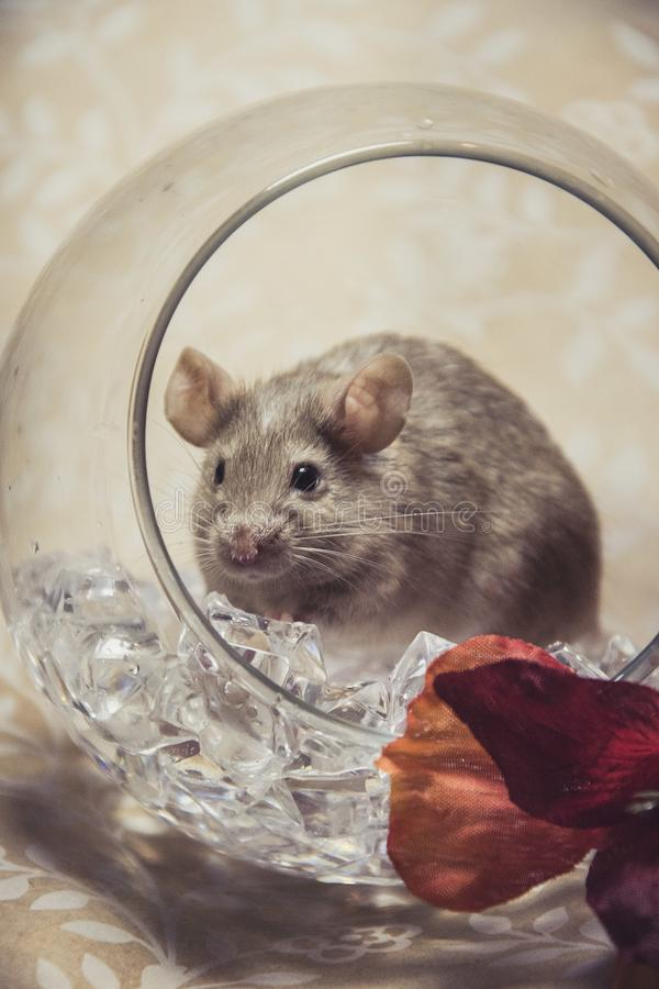 Brown-Mäusefall färbt Glaskugel stockfotos