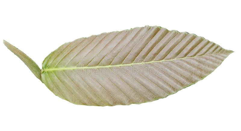 Brown a m?lang? des couleurs tropicales vertes de feuilles d'isolement sur les milieux blancs photo stock