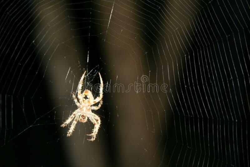 Brown manchó la araña de Orbweaver en el web complejo #3 imagenes de archivo