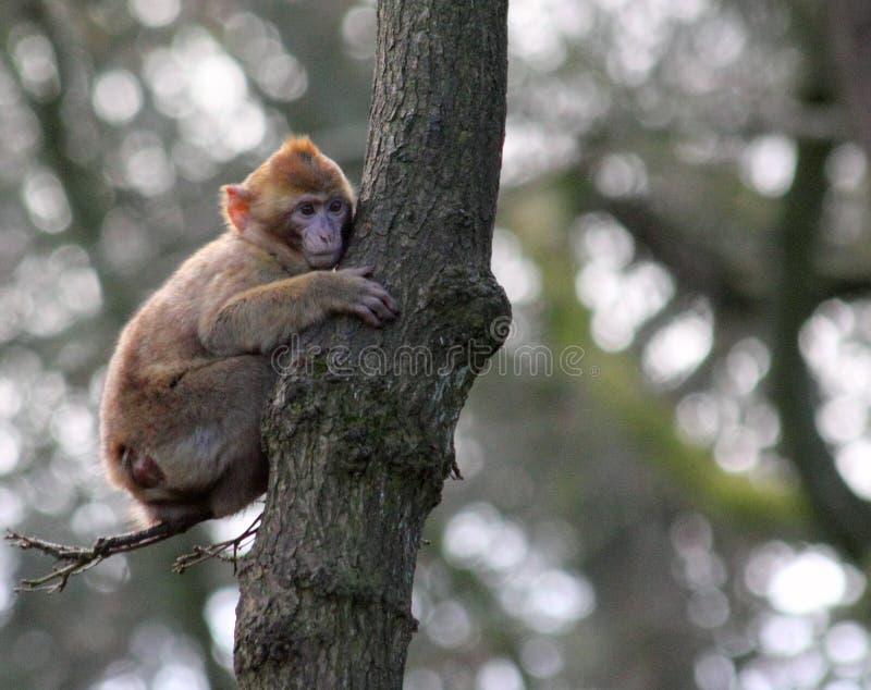 Brown Monkey On Green Tree Trunk Free Public Domain Cc0 Image