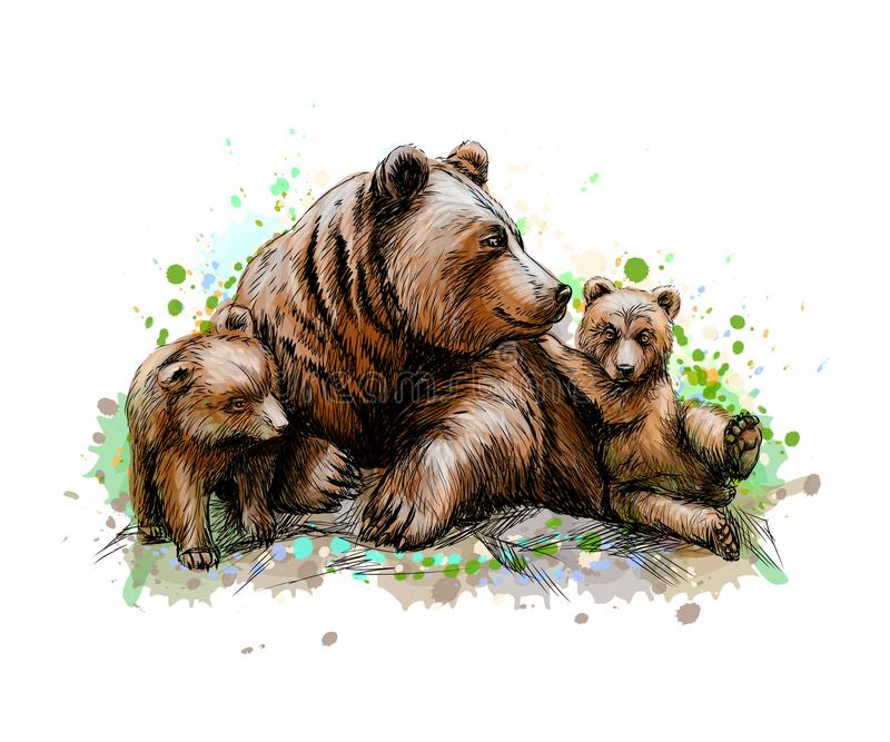 Brown mother bear with her cubs from a splash of watercolor. Hand drawn sketch. Vector illustration of paints vector illustration