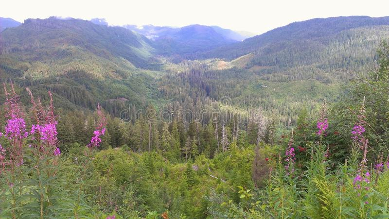 Brown mountain valley. Picture from near the top of brown mountain in ketchikan alaska, part of the tongass national forest stock photos