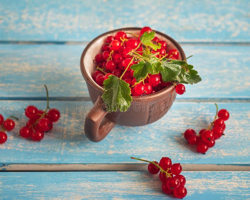 A brown mug full of red currants stands on a blue tray stock photography