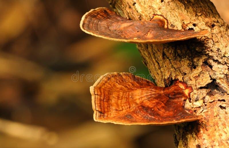 Download Brown mushroom stock photo. Image of dark, colorful, moss - 26549634