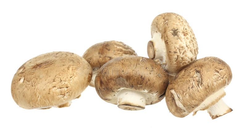 Brown Mushrooms. A stock photo of some brown mushrooms set against a white background stock photography