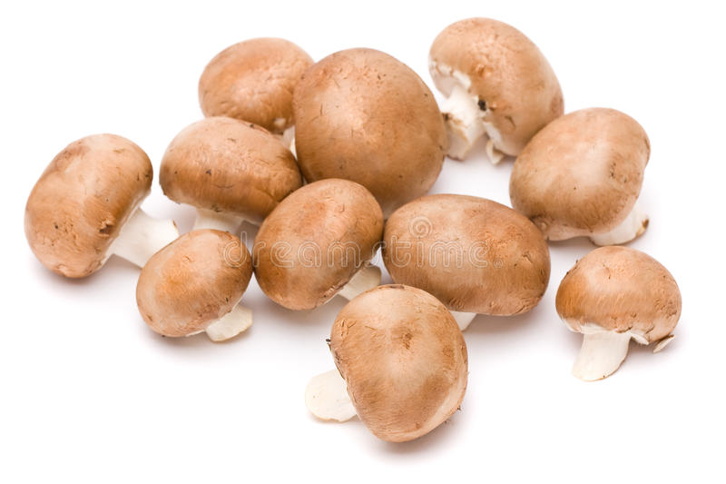 Brown mushrooms. Selection of organic brown mushrooms over white background stock photography
