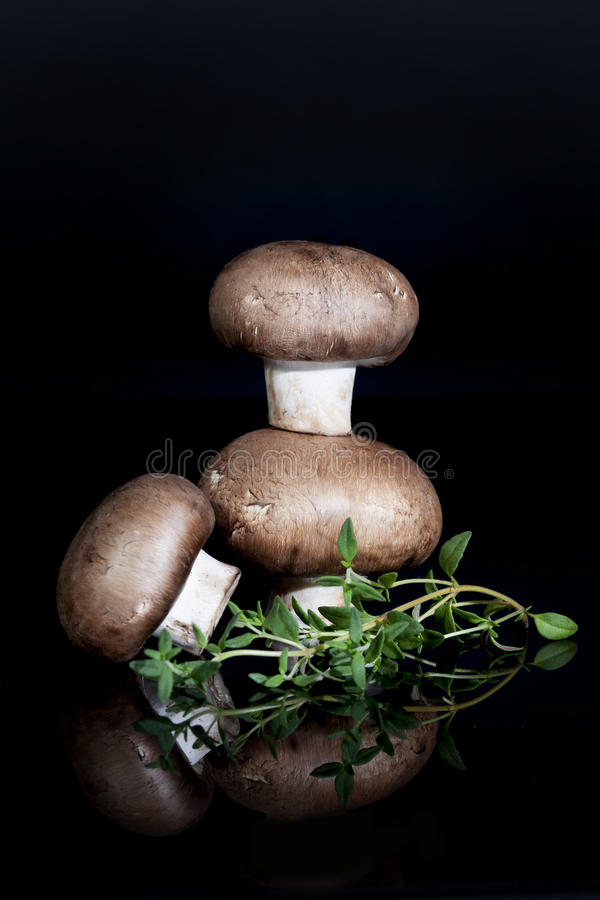 Brown Mushrooms. Common brown mushrooms with sprig of fresh thyme on black reflective surface stock photo