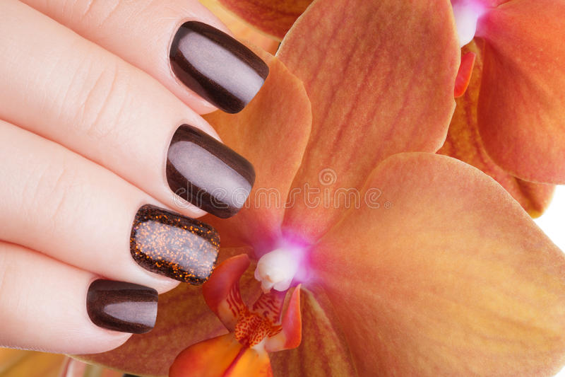 Brown nail polish on the nails. royalty free stock images