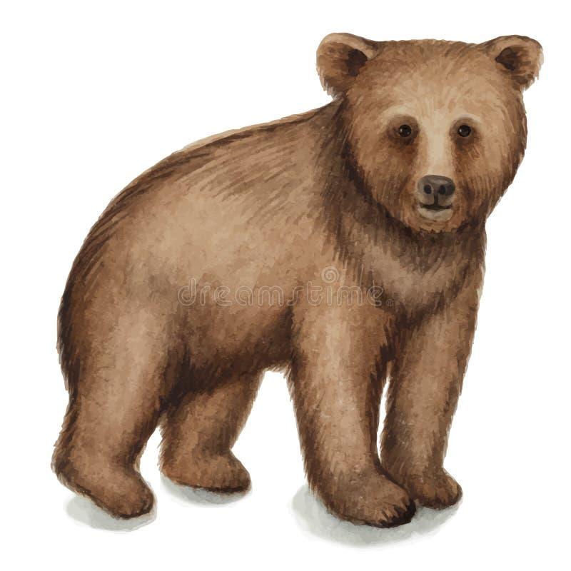 Brown niedźwiedź ilustracja wektor