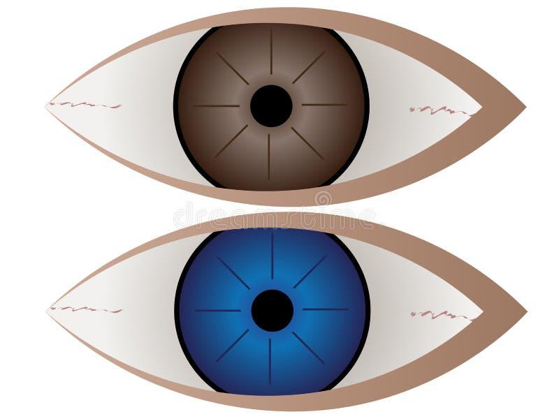 Brown och blått öga stock illustrationer