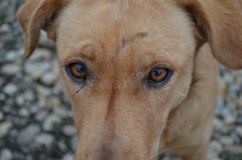 Brown oczy obrazy royalty free