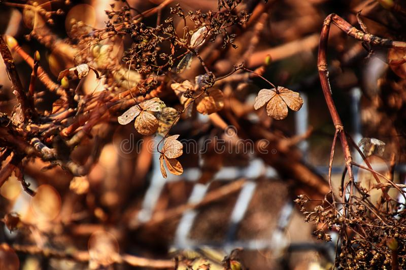 Brown old flowers of the autumn garden in the warm light of the afternoon sun stock photo