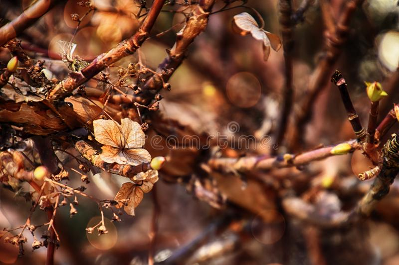 Brown old flowers of the autumn garden in the warm light of the afternoon sun royalty free stock photo