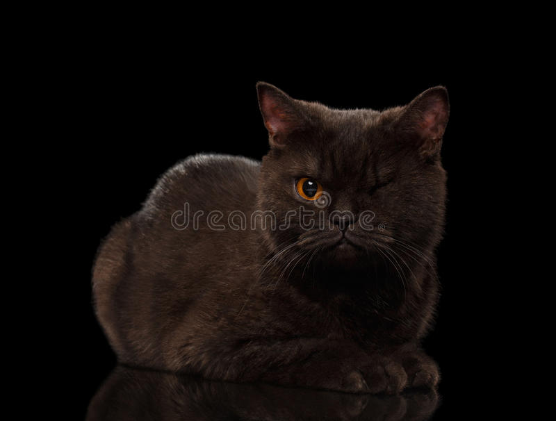 Brown One-Eyed Cat Lying on Black stock photo