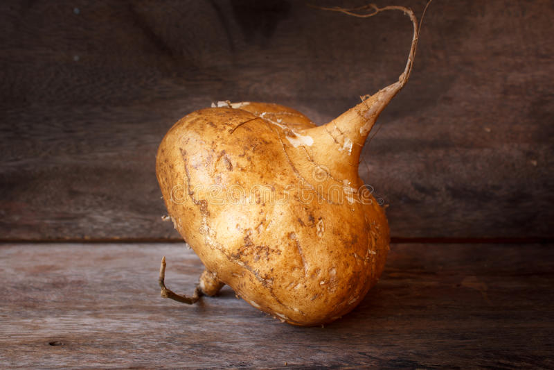 Brown organique cru Jicama ou igname-haricot photographie stock libre de droits